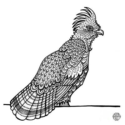 Drawing - Ruffed Grouse by Amy E Fraser