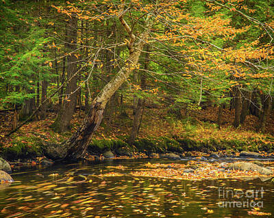Photograph - Running Waters by Alana Ranney