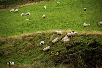 Photograph - Rural Idyll Of Ireland 1 by Jenny Rainbow