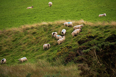 Photograph - Rural Idyll Of Ireland by Jenny Rainbow