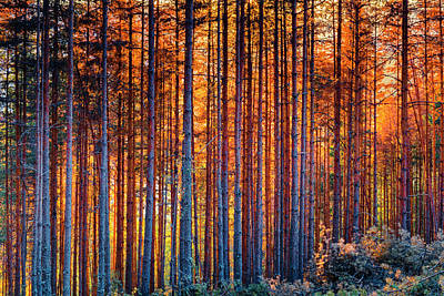 Photograph - Rusy Forest by Evgeni Dinev