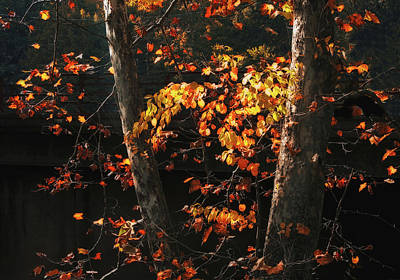 Photograph - Backlit Autumn Leaves by Jessica Jenney