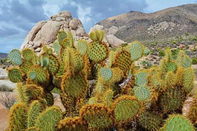 Photograph - Ryan Ranch Cactus by Kyle Hanson