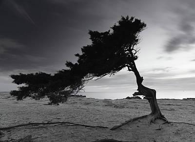 Photograph - Sa Savina by Ibiza Paraíso  Natural