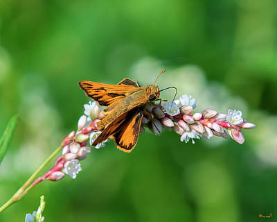Photograph - Sachem Skipper Din0274 by Gerry Gantt