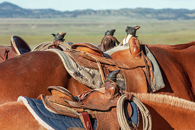 Photograph - Saddle Backs by Todd Klassy