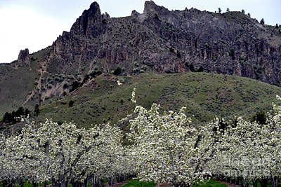 Photograph - Saddle Rock And Apple Blooms by Mae Wertz