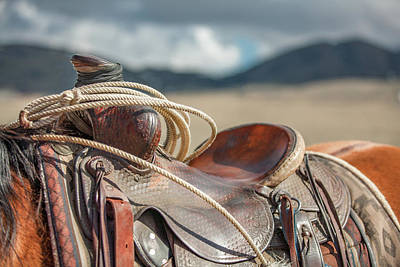 Quarter Horses Photograph - Saddle Top by Todd Klassy