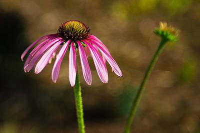 Photograph - Sadness in Pink by Jay Whipple