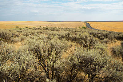 Photograph - Sagebrush And Ranch Road by Tom Cochran