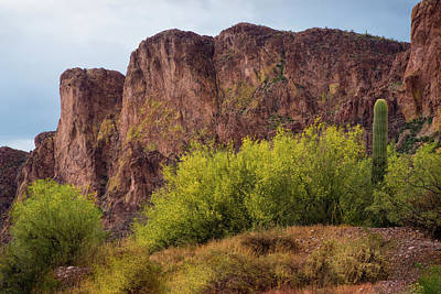 Photograph - Saguaro And Blooming Desert Plants by Dave Dilli