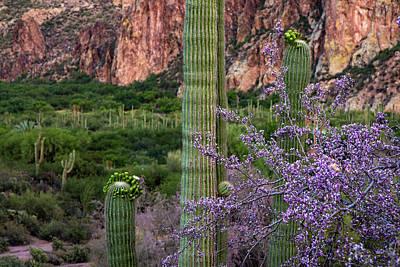 Photograph - Saguaro Cactus Blooms And Ironwood Close Up by Dave Dilli