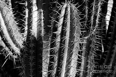 Photograph - Saguaro Cactus Bw 3 by Edward Fielding
