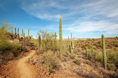 Photograph - Saguaro Cactus In The Sonoran Desert by Mark Duehmig
