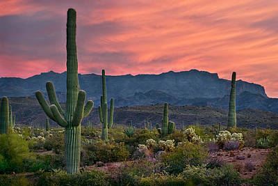 Photograph - Saguaro Cactus With Arizona Sunset by Dave Dilli