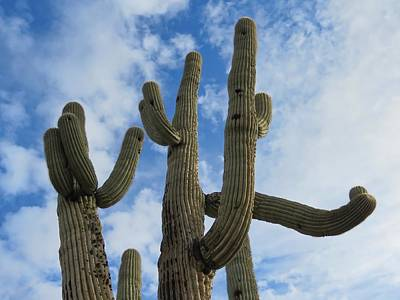 Photograph - Saguaro Clique by Judy Kennedy