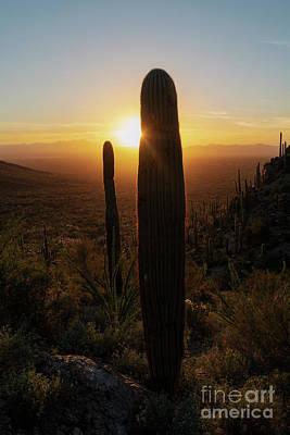 Photograph - Saguaro Glow by Mike Dawson