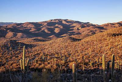 Photograph - Saguaro Hills by Lon Dittrick