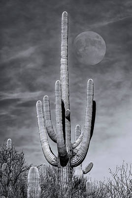 Mark Myhaver Rights Managed Images - Saguaro Moon m1134 Royalty-Free Image by Mark Myhaver