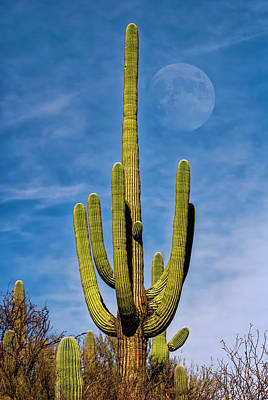 Mark Myhaver Rights Managed Images - Saguaro Moon v1133 Royalty-Free Image by Mark Myhaver