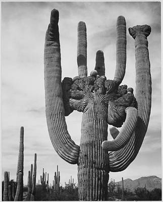 Photograph - Saguaro National Monument by Buyenlarge