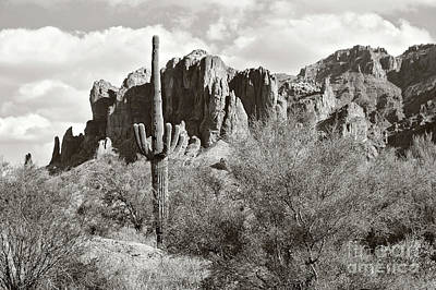 Vermeer Rights Managed Images - Saguaro Royalty-Free Image by Sylvia Cook