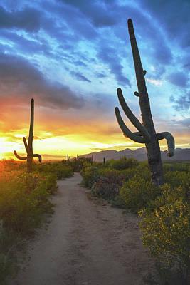 Rincon Mountains Wall Art - Photograph - Saguaro Trail by Chance Kafka