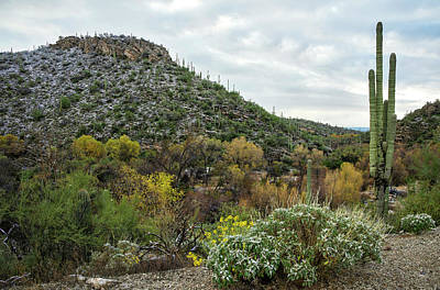 Photograph - Saguaros With Fall Colors And Snow by Dave Dilli