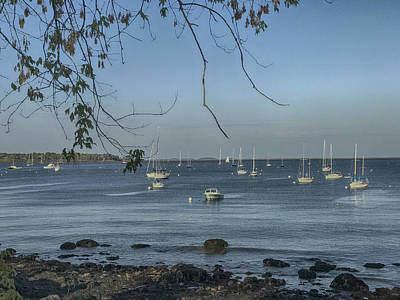 Photograph - Sailboats In Rockland Harbor by Pamela Hodgdon