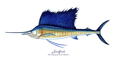 Sports Paintings - Sailfish by Charles Harden