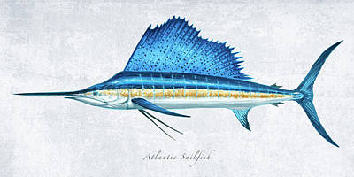 Wall Art - Painting - Sailfish Portrait by Guy Crittenden