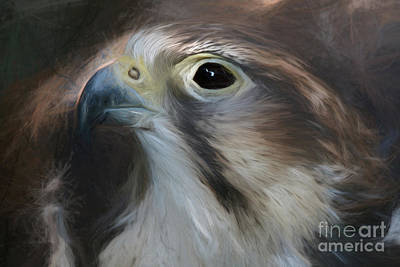 Photograph - Saker Falcon - Art by Sue Harper