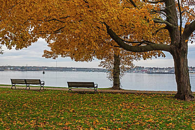 Photograph - Salem Willows Yellow Autumn Tree Salem Ma by Toby McGuire