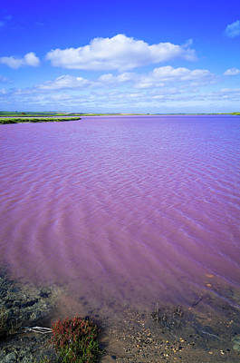 Photograph - Saline Pink Lake Of Coorong, South by Whitworth Images