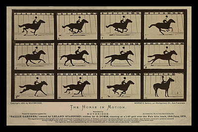 Photograph - Sallie Gardner At A Gallop - Horse In Motion by Richard Reeve