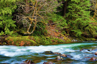 Photograph - Salmon River Mt. Hood National Forest by Dee Browning