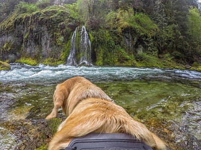 Art Print featuring the photograph Salt Creek Falls By Photo Dog Jackson by Matthew Irvin