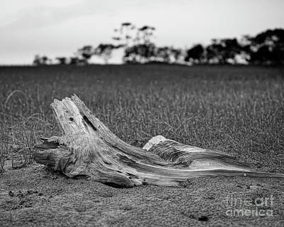 Photograph - Salt Marsh by Patrick M Lynch