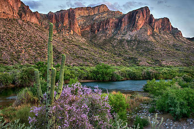 Photograph - Salt River Saguaro And Ironwood Blooms by Dave Dilli