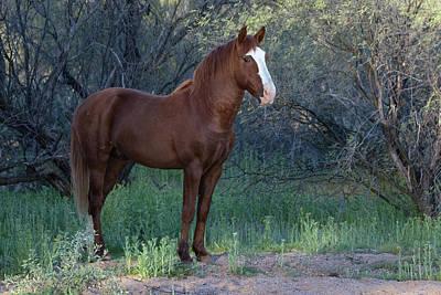 Photograph - Salt River Wild Horse 5136-022619-2 by Tam Ryan