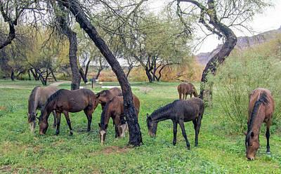 Photograph - Salt River Wild Horses 0305-010619-1 by Tam Ryan
