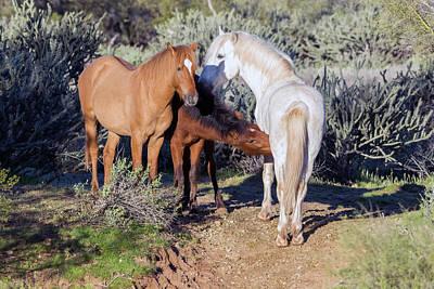 Photograph - Salt River Wild Horses 5162-022619 by Tam Ryan