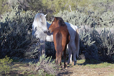 Photograph - Salt River Wild Horses 5164-022619-2 by Tam Ryan