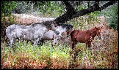 Photograph - Salt River Wild Horses by Elaine Malott