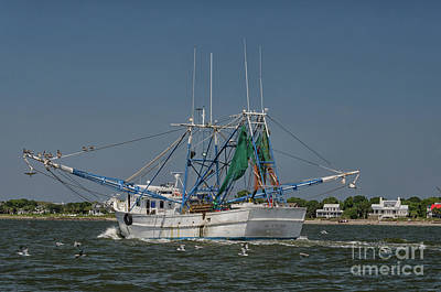 Photograph - Salt Water Life - Mrs. Judy Too by Dale Powell