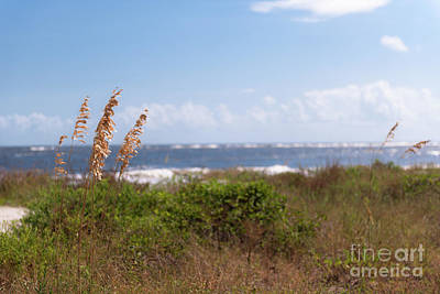Photograph - Salty Island Breeze Over Breach Inlet by Dale Powell