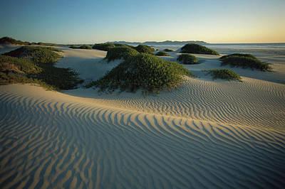 Photograph - Sand Dunes Stabilized By Vegetation by Tui De Roy/ Minden Pictures