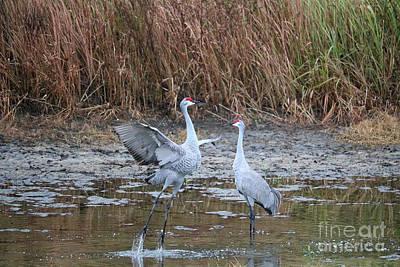 Photograph - Sandhill Crane Pair Meet Cute by Carol Groenen
