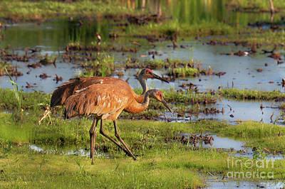 Photograph - Sandhill Crane Pair by Sheila Skogen