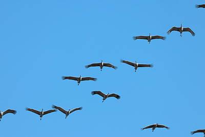 Photograph - Sandhill Cranes 3727 by John Moyer